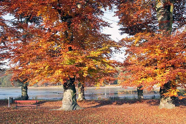Schlosspark Machern in Sachsen in herbstlichen Farben