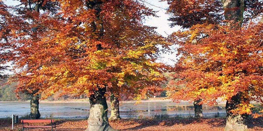 Herbstliches Sachsen