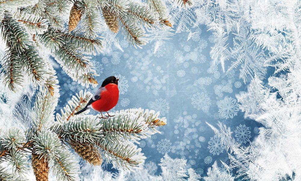Winterliches Bild